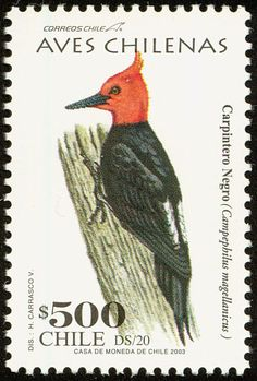 Chile bird stamps - mainly images - gallery format