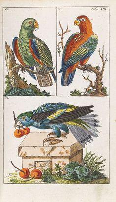 Gottlieb Tobias Wilhelm - Unterhaltungen Naturgeschichte Vögel. 2 Bde. 1795.