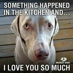 LOL....and SO TRUE!!! A weimaraner in the kitchen is always trouble!!