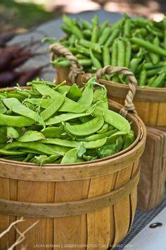 At the farmers market.   GreenFuse Photos: Garden, farm & food photography