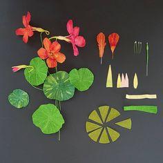 "442 Likes, 28 Comments - Lynn Dolan (@lmdolan75) on Instagram: ""Paper Plant Pocket Field Guide: Nasturtium. Florist Crepe, Doublette, 24g /26g wire, Millinery…"""