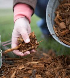 Stop Weeds-Besides being just plain ugly, weeds steal nutrients from the soil and may attract insects or disease. The easiest way to prevent weeds from being an issue is to spread 2 to 3 inches of mulch over the soil. Your bulbs will easily push up through it, but most weed seeds won't.