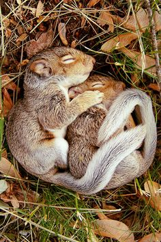 Chipmunk love!
