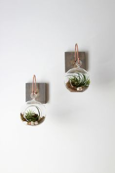 A unique wall hanging mount and complete terrarium. Wall mount measures: 5 x 5 Terrarium measures: 4 x 4 Single mount and complete terrarium. Shown here in weathered gray. Complete terrarium includes two small air plants, surrounded by moss and sand. Picture wire on back for quick