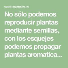 No sólo podemos reproducir plantas mediante semillas, con los esquejes podemos propagar plantas aromaticas de forma fácil y gratis Math, Bilbao, Ideas, Shape, Vegetables Garden, Plants, Homemade, Basil, Math Resources