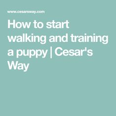How to start walking and training a puppy | Cesar's Way