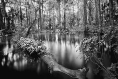 East Coast FL Collection – Clyde Butcher | Black & White Fine Art Photography