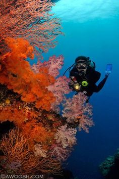 Fiji's reefs — which boast colorful, spectacular displays of soft coral — are a perfect canvas for underwater photographers.