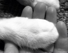 #hand and #paws #cat #mano y #pata #gato
