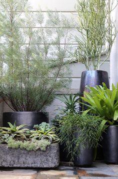 C'est beau les plantes dans du noir.   Alors je me dis qu'il n'y a plus qu'à repeindre mes pots en noir : une solution moins coûteuse que...