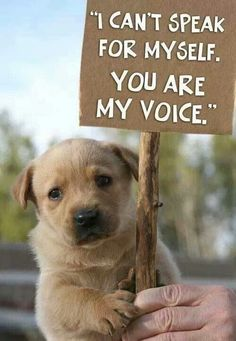 """Absolutely! It is our job to protect innocent animals! If you want to pin to this board and help share about animal abuse, please type """"stop animal abuse"""" on anything on this board, and I will get back to you as soon as I can."""