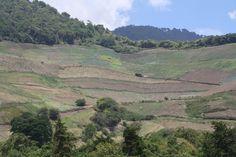Chiriqui, cerro punta