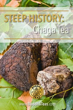 Curious about what makes Chaga Tea so special? Take a five minute tour through the medicinal history of this remarkable tea remedy! Tea Facts, Tea Blog, Tea Recipes, Health Benefits, Buddha, Vitamins, Stuffed Mushrooms, Remedies, Cancer