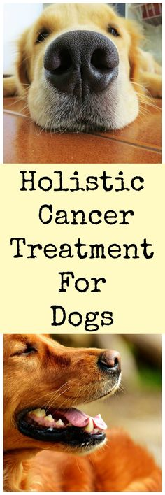 Treating dog cancer with natural medicine.