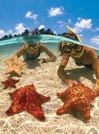 I did this in the Caribbean! Even held a starfish that big :) Coolest experience!