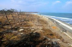 環境省の快水浴場百選にも認定されていた双葉海水浴場。津波で堤防が決壊し、松林は枯れていた=25日午後、福島県双葉町、小川智撮影