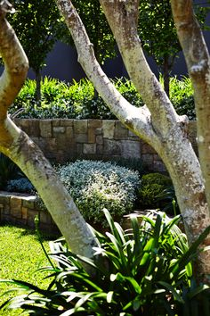 Outdoor Establishments is a Sydney based Landscape Architecture & Residential Garden Design firm also offering clients Landscape Construction, Professional Horticulture and Garden Maintenance. A complete Landscape service from concept to completion. Landscaping Retaining Walls, Pool Landscaping, Garden Landscape Design, Backyard Design, Outdoor, Landscape Services, Landscape Design, Landscape, Australian Garden