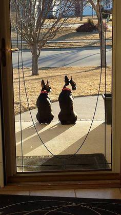 Everything | Boston Terrier Friendzy