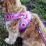 Dog Clothing & Accessories To Make: {Free Patterns} : TipNut.com