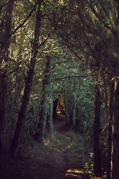 path into the woods <3