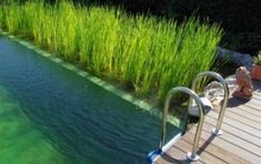 Bio-swimming-pool (Biopiscine:) uses a natural process of wastewater treatment which uses aquatic plants as biological filter
