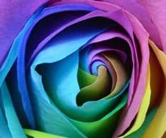 Colorful Rainbow Rose Fine Art Floral Square Photo Canvas Print - decor gifts diy home & living cyo giftidea Youtube Banner Template, Youtube Banners, Photo Fleur Rose, Bokeh, Rose Color Meanings, Rose Flower Photos, Rose Flowers, Rainbow Roses, Colorful Roses