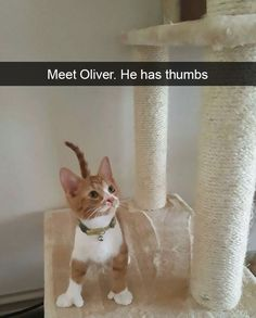 22 Seriously Funny Snaps