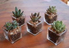 top-30-lembrancinhas-de-casamento-san-pedro-cactus-1.jpg 456×318 pixels