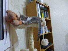 Agatha... my cat!!