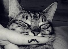 awww kitty with a mustache!!