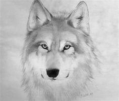 Wolf sketch by unknown artist