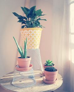 recycled plants stand