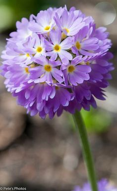 What does this flower look like!? The fairies love to use this to play _____! What game could you play with something small and round that you can catch with your hands???