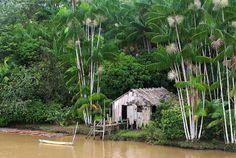 The Amazon Rainforest (