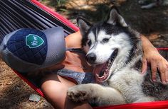 """10.4k Likes, 128 Comments - Camping With Dogs® (@campingwithdogs) on Instagram: """"Hammock cuddles. #campingwithdogs @goldentrailz  Shop for the trucker hat at [link in bio]."""""""