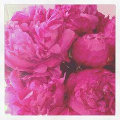 hot pink peonies