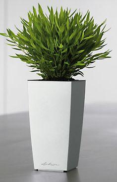 Lechuza Mini-cubi   Self-watering planter in Silver