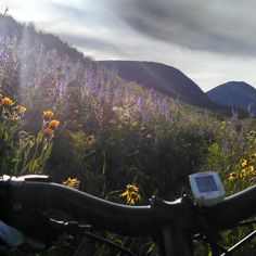 Head high flowers on my after work ride on Meander. #trailgram #crestedbutte #colorado #mountainbiking #wildflowers #summer