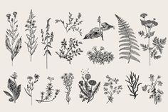 Herbs & Wild Flowers. Set - Illustrations - 2