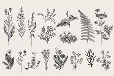 Herbs & Wild Flowers. Set - Illustrations - 2