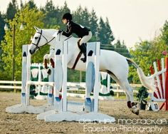 one day i will own an irish sport horse.