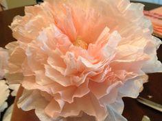 DIY Coffee Filter Peonies ~ Becker it Yourself Tissue Paper Flowers, Felt Flowers, Diy Flowers, Fabric Flowers, Material Flowers, Coffee Filter Roses, Coffee Filter Crafts, Coffee Filters, Diy And Crafts