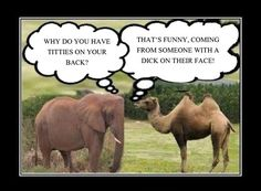 funny adult jokes | Camel  Elephant - Funny Sex Joke : I Love Dirty Jokes Story ...