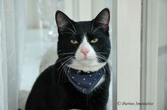 Bufi, the cat | by Pierino Smaniotto
