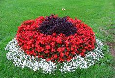 10 Plants Flowering in July