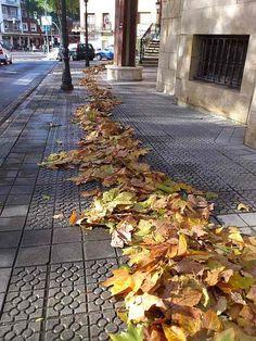 Planeta Bilbao.El camino de hojas amarillas 2