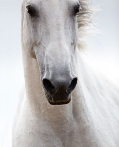 Horse photography, horse pictures, animals beautiful, most beautiful horses, Most Beautiful Horses, All The Pretty Horses, Simply Beautiful, Beautiful Images, Beautiful Creatures, Animals Beautiful, Horse Ears, Majestic Horse, Portraits