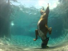 Pool diving Boxer dog, he swims under water! - YouTube