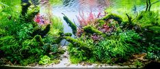 Layout 118 - The Power of Silence - Claudio Sartor - Tropica Aquarium Plants Aquarium Aquascape, Aquascaping, Planted Aquarium, Aquarium Setup, Sand Decorations, L And Light, Plant Growth, Fresh Water, Layout