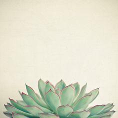 Echeveria Art Print by Cassia Beck | Society6
